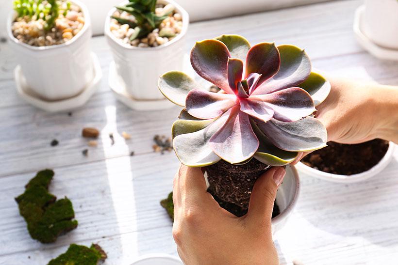 Dicas de plantas para apartamento